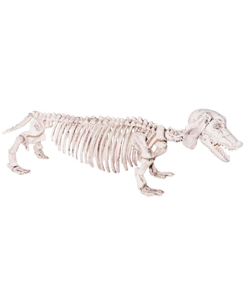 skeleton dachshund plastic